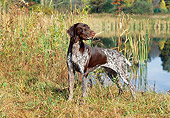 DOG 06 LS0027 01