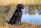 DOG 06 LS0028 01