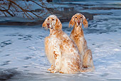 DOG 06 LS0029 01