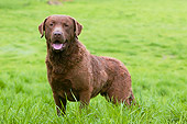 DOG 06 NR0018 01