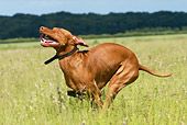 DOG 06 NR0022 01