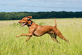 DOG 06 NR0023 01