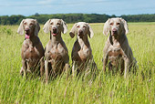 DOG 06 NR0025 01