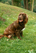 DOG 06 RC0001 01
