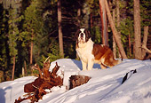 DOG 06 RK0017 12