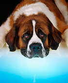DOG 06 RK0046 11
