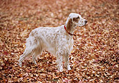 DOG 06 RK0049 08