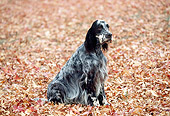 DOG 06 RK0053 01