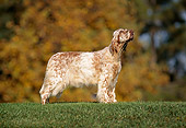 DOG 06 RK0057 05