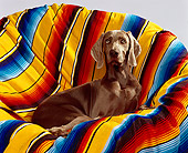 DOG 06 RK0061 07