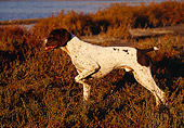DOG 06 RK0067 06