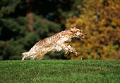 DOG 06 RK0074 01