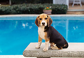 DOG 06 RK0096 04