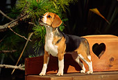DOG 06 RK0105 04