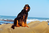 DOG 06 RK0130 05