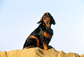 DOG 06 RK0136 02