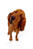 DOG 06 RK0196 02