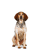 DOG 06 RK0199 02