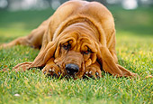 DOG 06 RK0218 06