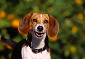 DOG 06 RK0219 05