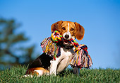 DOG 06 RK0221 08