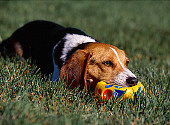 DOG 06 RK0223 02