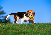 DOG 06 RK0224 01