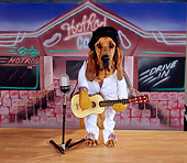 DOG 06 RK0235 02