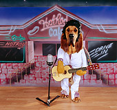 DOG 06 RK0235 12