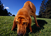 DOG 06 RK0244 11