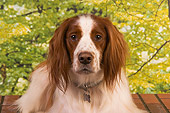 DOG 06 RK0248 01