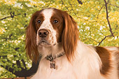 DOG 06 RK0249 01