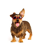 DOG 06 RK0251 01