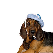 DOG 06 RK0252 01