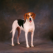 DOG 06 RS0006 06