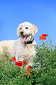 DOG 07 AC0013 01
