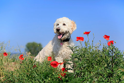 DOG 07 AC0014 01