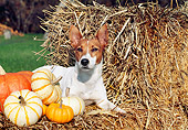 DOG 07 JN0002 01
