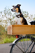 DOG 07 JS0002 01
