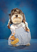 DOG 07 MQ0113 01