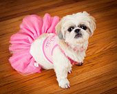 DOG 07 MQ0115 01