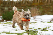 DOG 07 NR0010 01