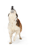 DOG 07 PE0003 01