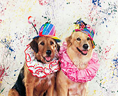 DOG 07 RK0169 04