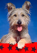 DOG 07 RK0372 02