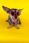 DOG 07 RK0453 01