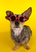 DOG 07 RK0453 30