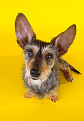 DOG 07 RK0456 13