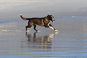 DOG 07 KH0009 01