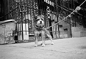 DOG 07 MQ0026 01